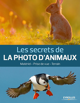 Les secrets de la photo d animaux